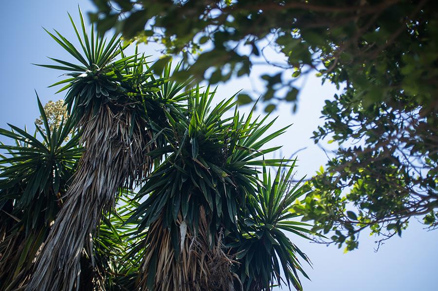 trees green summer