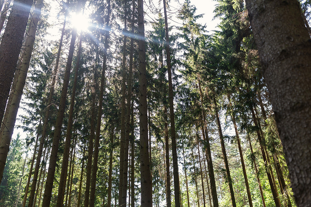 04_sushine-in-the-woods