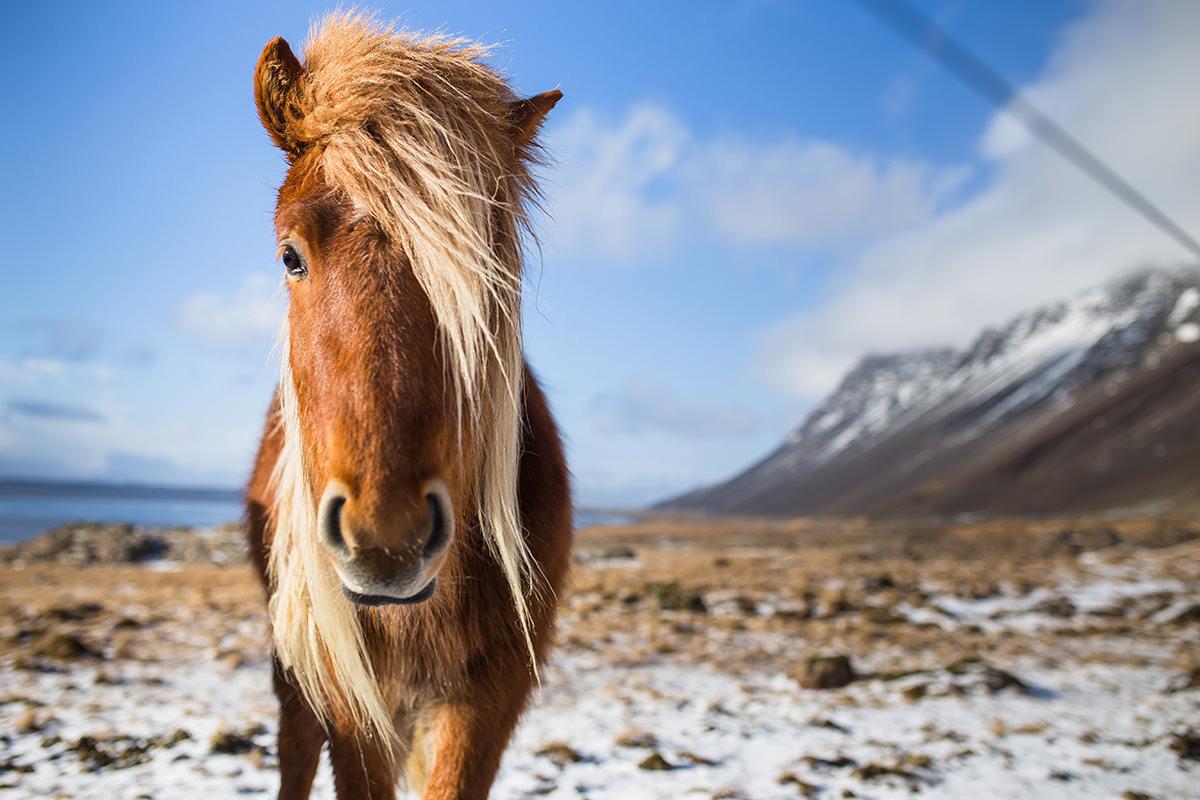 14_Iceland