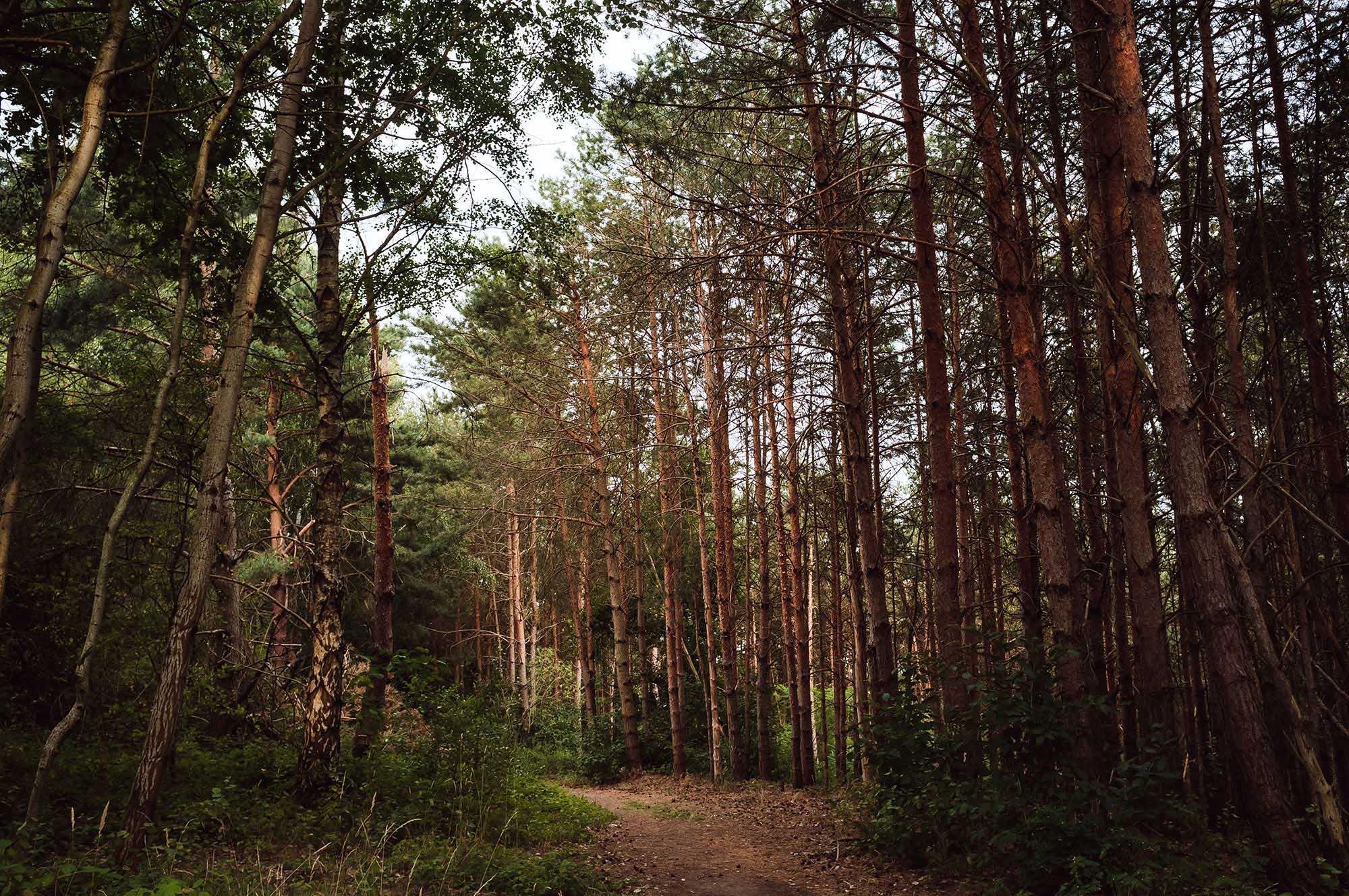 wood forest lake leipzig