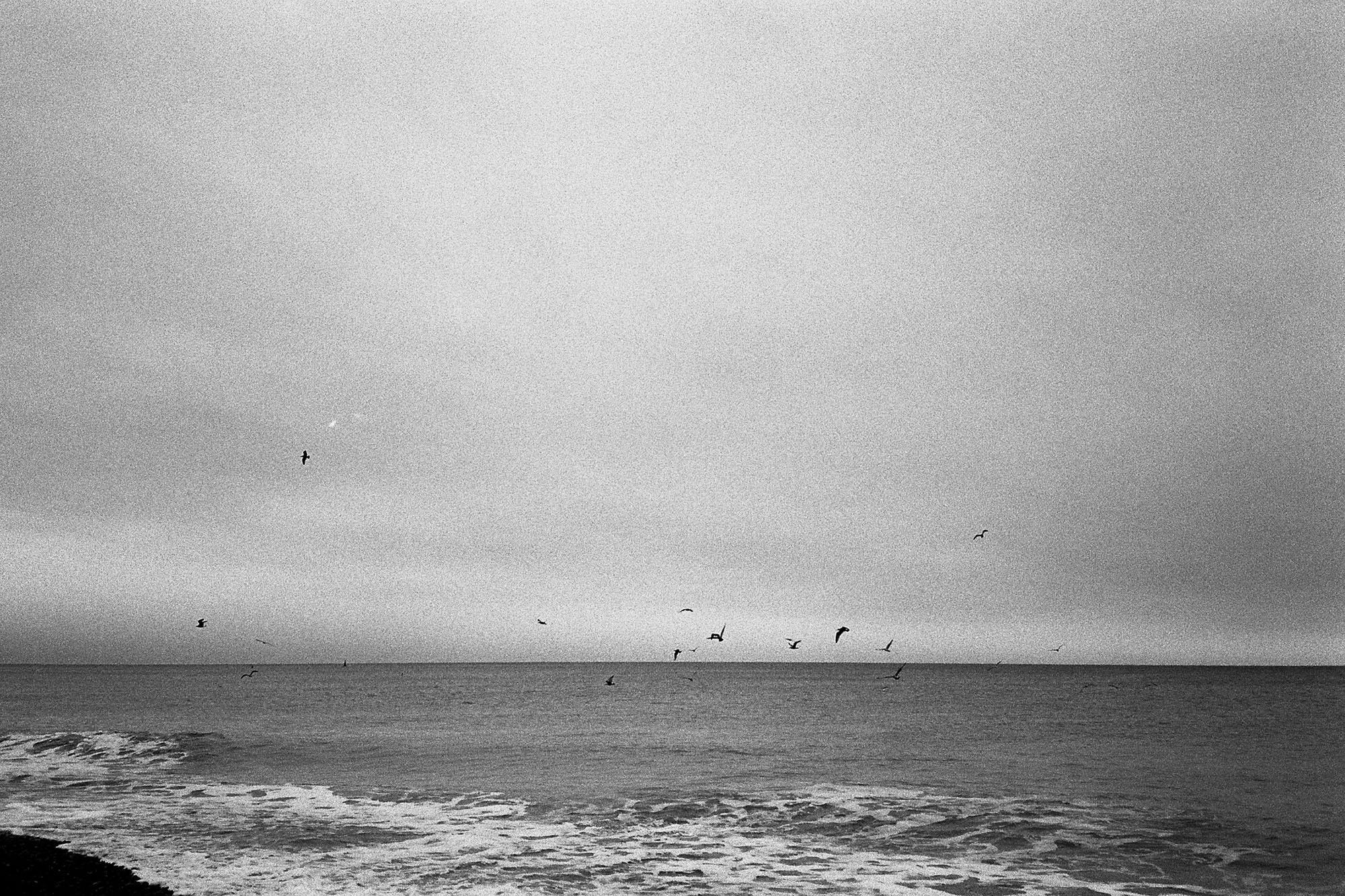 scenic-view-brighton-beach-birds-film-photography