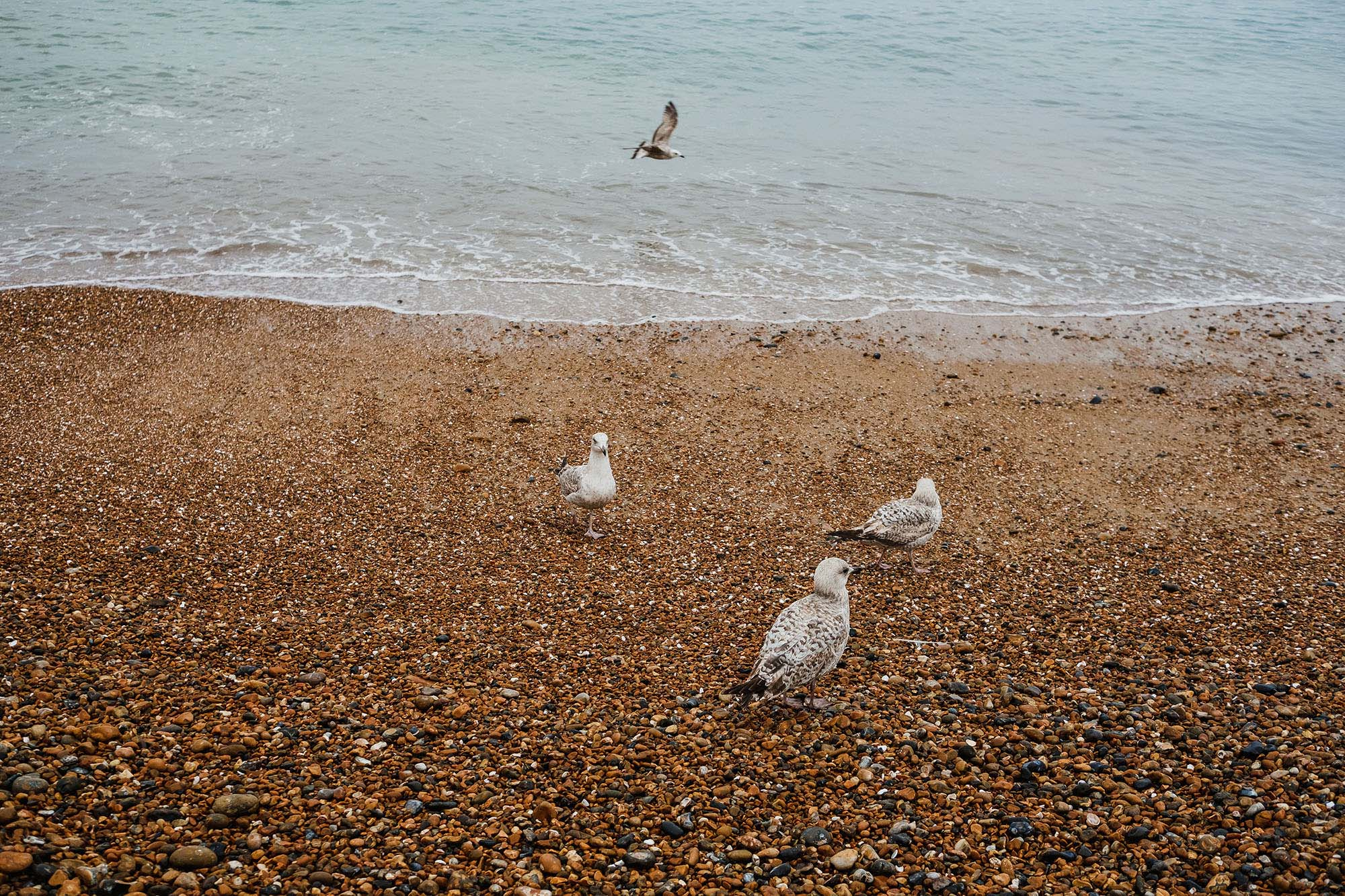 24 hours of photos in Brighton