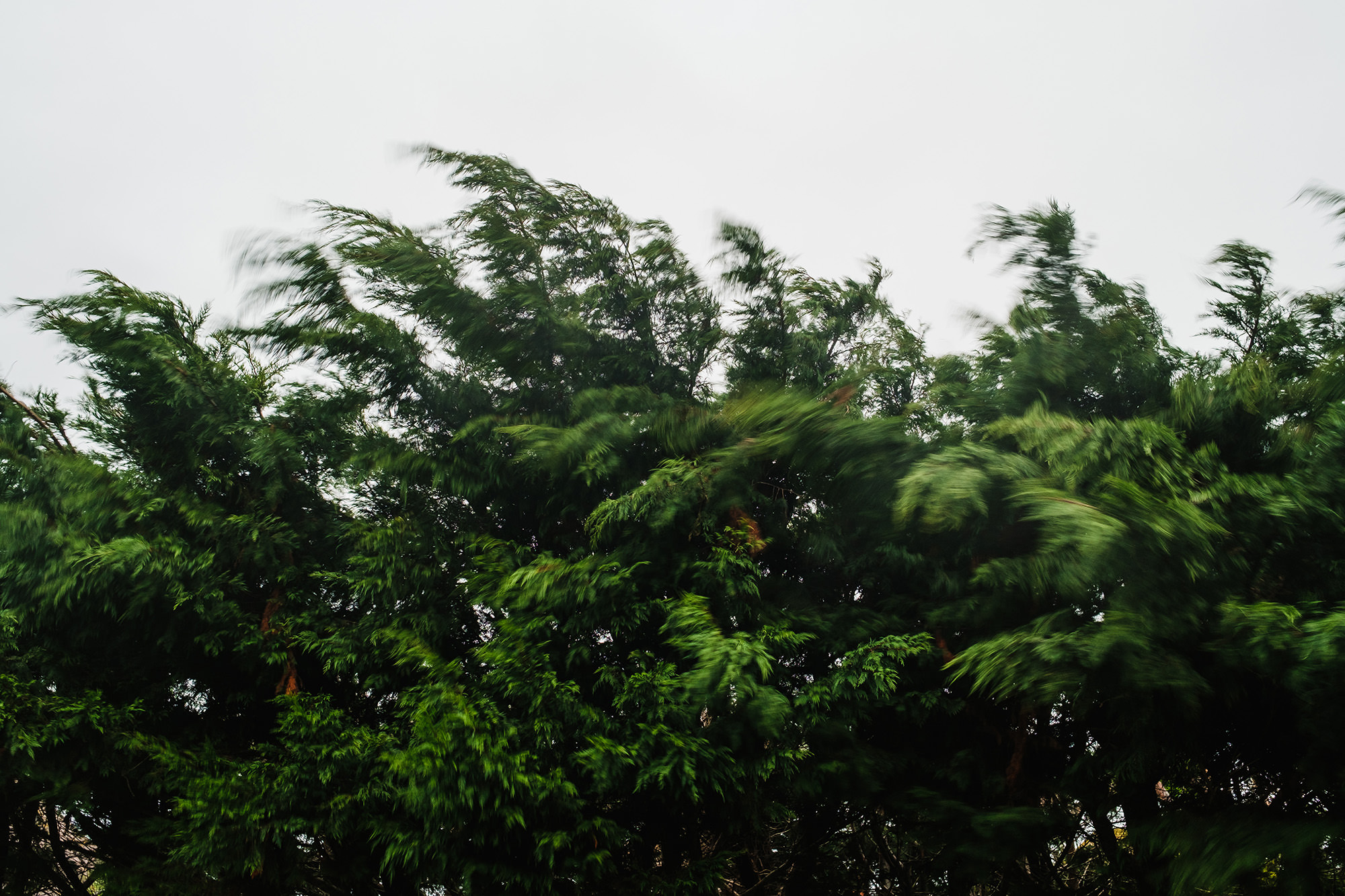 storm in the trees