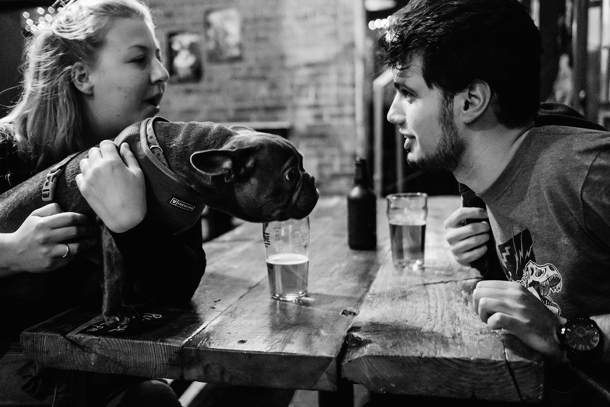 friends and dogs at pub