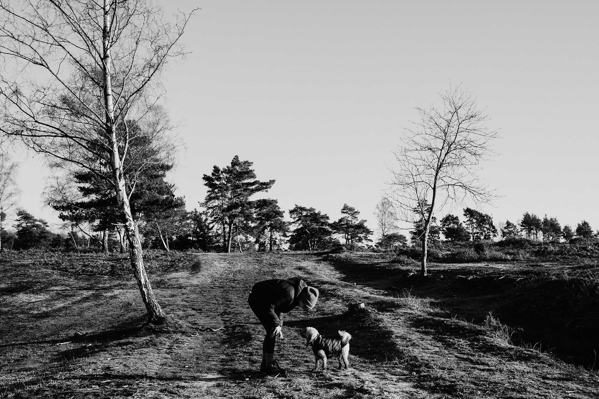 dog walking new forest docuementary photography