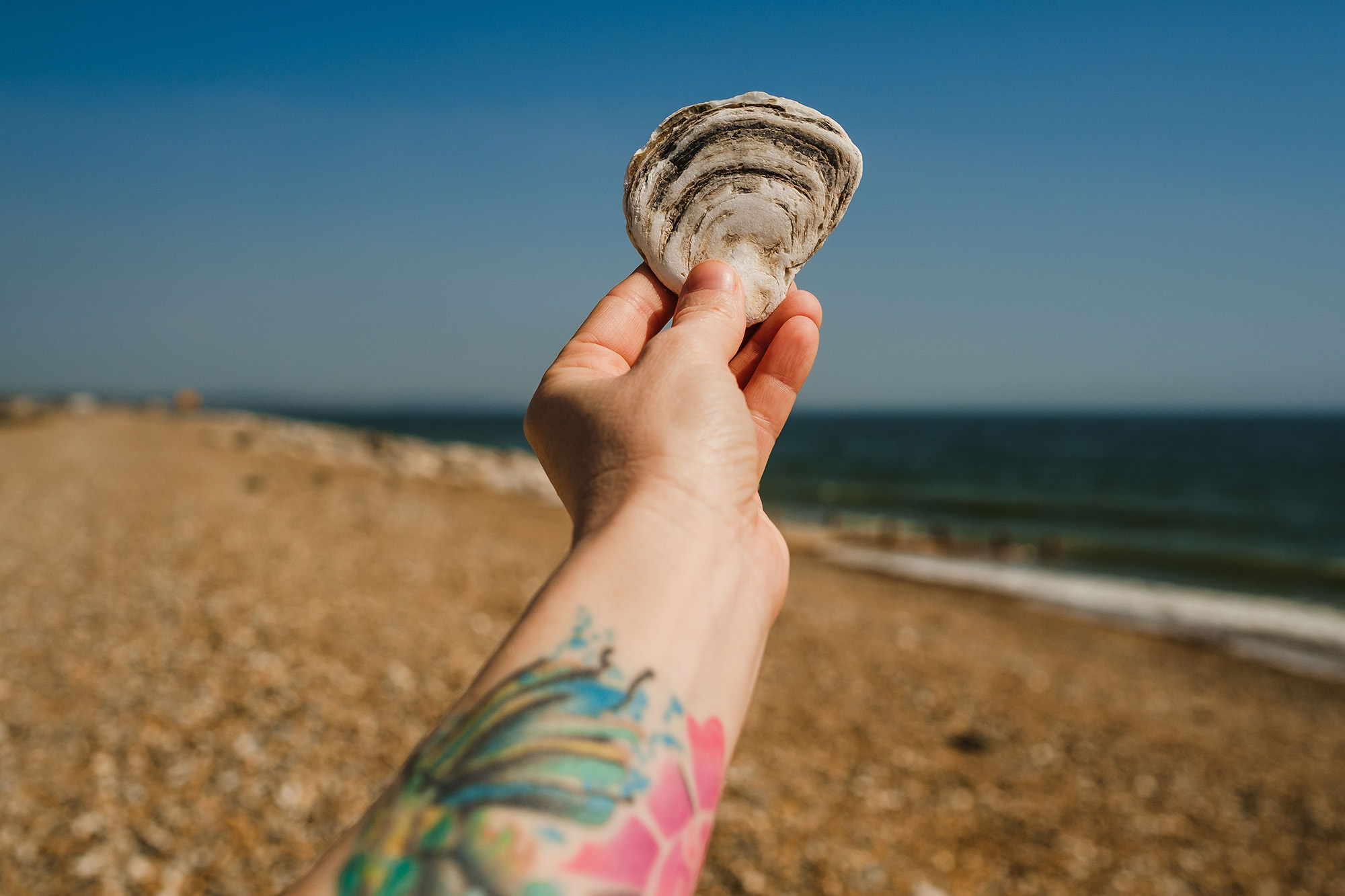 stone shaped shell