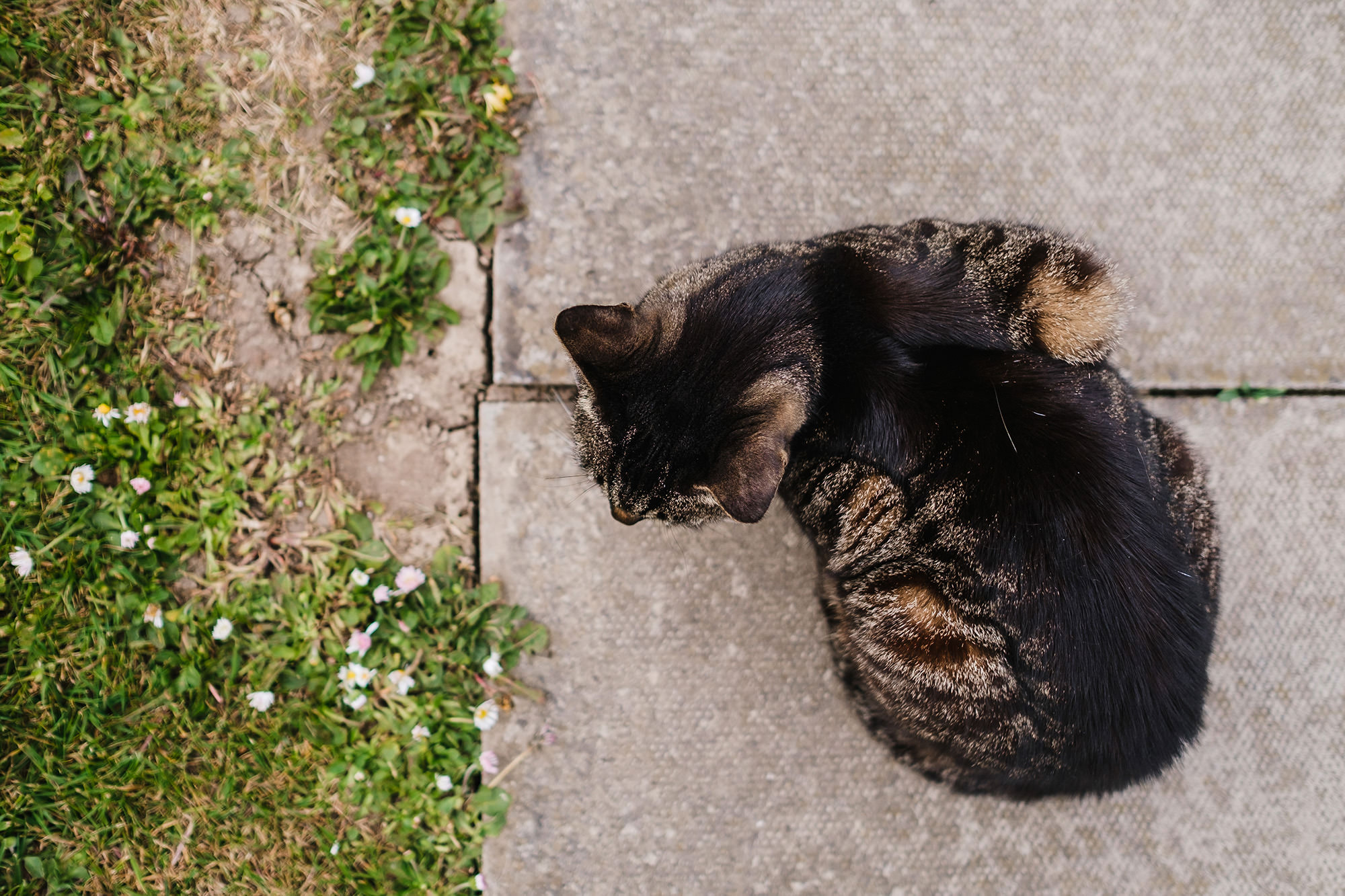 cat on the pavement