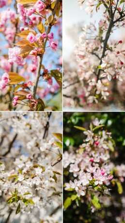 free iphone wallpaper spring theme