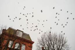 looking up in hove
