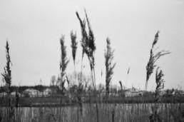 nature walks on film