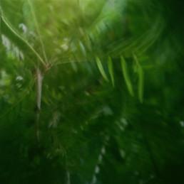 nature shot leaves on film