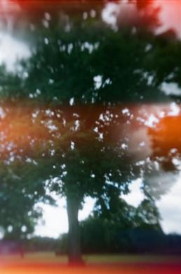 tree with light leaks on film